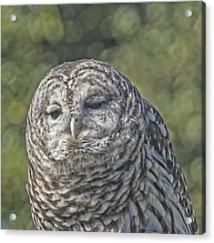 Acrylic Print featuring the photograph Barred Hoot Owl Photo Art by Constantine Gregory