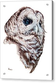 Acrylic Print featuring the drawing Barred Owl by Brent Ander