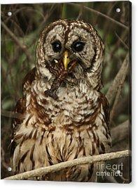 Barred Owl Eating Crawfish Acrylic Print by Kelly Morvant