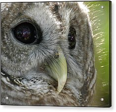 Acrylic Print featuring the photograph Barred Owl  by Geraldine Alexander