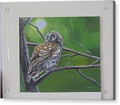 Barred Owl Acrylic Print by James Lawler