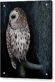 Barred Owl On A Mossy Perch Acrylic Print