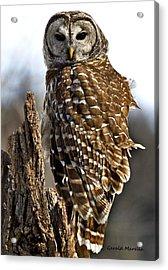 Barred Owl Portrait 1 Acrylic Print by Gerald Marella