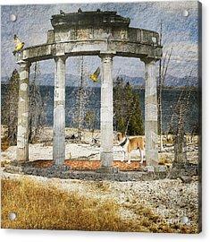 Barren Shoreline Acrylic Print by Liane Wright