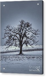Acrylic Print featuring the photograph Barren Winter Scene With Tree by Dan Friend