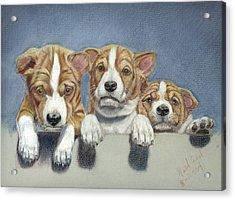Basenji Puppies Acrylic Print