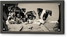 Basket Of Chi Acrylic Print