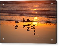 Acrylic Print featuring the photograph Basking In Sunshine by Sharon Jones