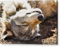 Basking In The Sun Acrylic Print by Brian Cross