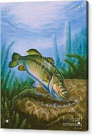 Bass And Crawdad Acrylic Print by Jon Q Wright