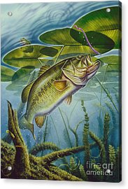 Bass And Frog Acrylic Print by Jon Q Wright