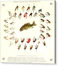 Bass Fishing Flies 1882 Acrylic Print