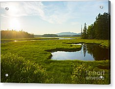 Bass Harbor Marsh At Dusk Acrylic Print by Diane Diederich