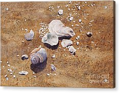 Acrylic Print featuring the painting Bass River Seashells by Karol Wyckoff