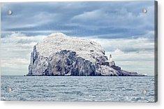 Bass Rock Acrylic Print