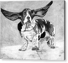 Basset Artesien Normand Dog Portrait Acrylic Print by Olde Time  Mercantile
