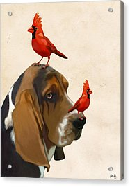 Basset Hound And Red Birds Acrylic Print by Kelly McLaughlan