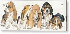 Basset Hound Puppies Acrylic Print by Barbara Keith