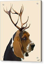 Basset Hound With Antlers Acrylic Print by Kelly McLaughlan
