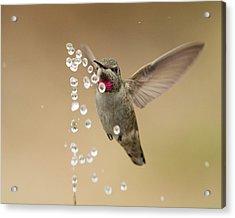 Bath Time For Anna's Hummingbird Acrylic Print by Doug Herr