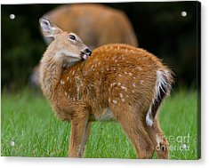 Bath Time Acrylic Print