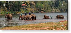 Acrylic Print featuring the photograph Bath Time by Vivian Christopher