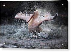 Bathing Fun ..... Acrylic Print