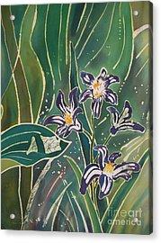 Batik Detail - Pushkinia Acrylic Print by Anna Lisa Yoder