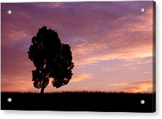 Battlefield Tree Acrylic Print