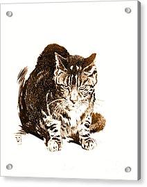 Battleship Cat 1898 Acrylic Print