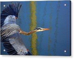 Bay Blue Heron Flight Acrylic Print by Robert Bynum