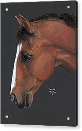 Bay Horse  Acrylic Print by Heather Gessell
