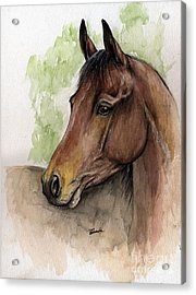 Bay Horse Portrait Watercolor Painting 02 2013 A Acrylic Print by Angel  Tarantella