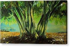 Bay Leaves Tree Acrylic Print