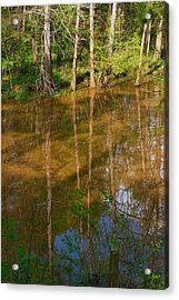 Bayou Reflections Acrylic Print by Connie Fox