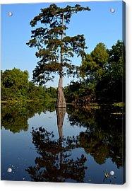 Bayou Reflections Acrylic Print