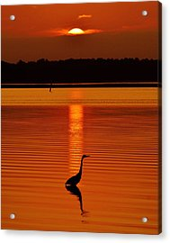 Bayside Ripples - A Heron Takes An Evening Stroll As The Sun Sets Behind The Clouds On The Bay Acrylic Print