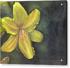 'be A Lily Among Thorns' Acrylic Print