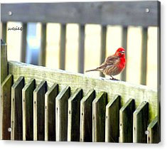 Beach Bird Acrylic Print by Sue Rosen