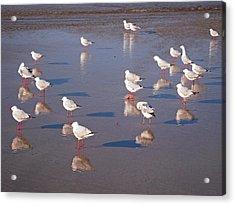 Acrylic Print featuring the photograph Beach Birds 2 by Ankya Klay