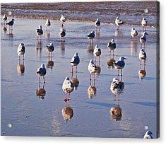 Acrylic Print featuring the photograph Beach Birds 3 by Ankya Klay