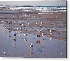 Acrylic Print featuring the photograph Beach Birds 4 by Ankya Klay