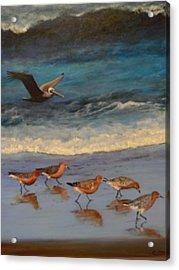 Beach Birds Acrylic Print by Catherine Hamill