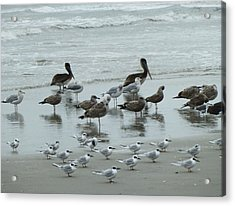 Beach Birds Acrylic Print by Judith Morris