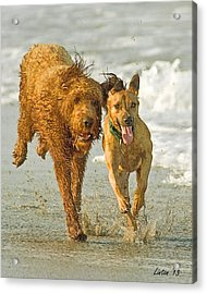 Beach Buddies Acrylic Print by Larry Linton
