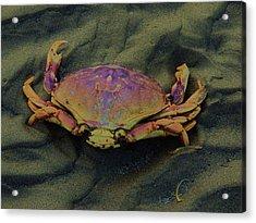 Beach Crab Acrylic Print by Helen Carson
