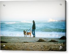 Acrylic Print featuring the photograph Beach Dogs by Phil Mancuso