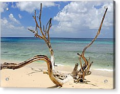 Beach Driftwood In Barbados Acrylic Print by Willie Harper
