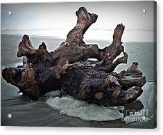 Beach Driftwood In Color Acrylic Print
