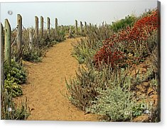 Acrylic Print featuring the photograph Beach Dune  by Kate Brown